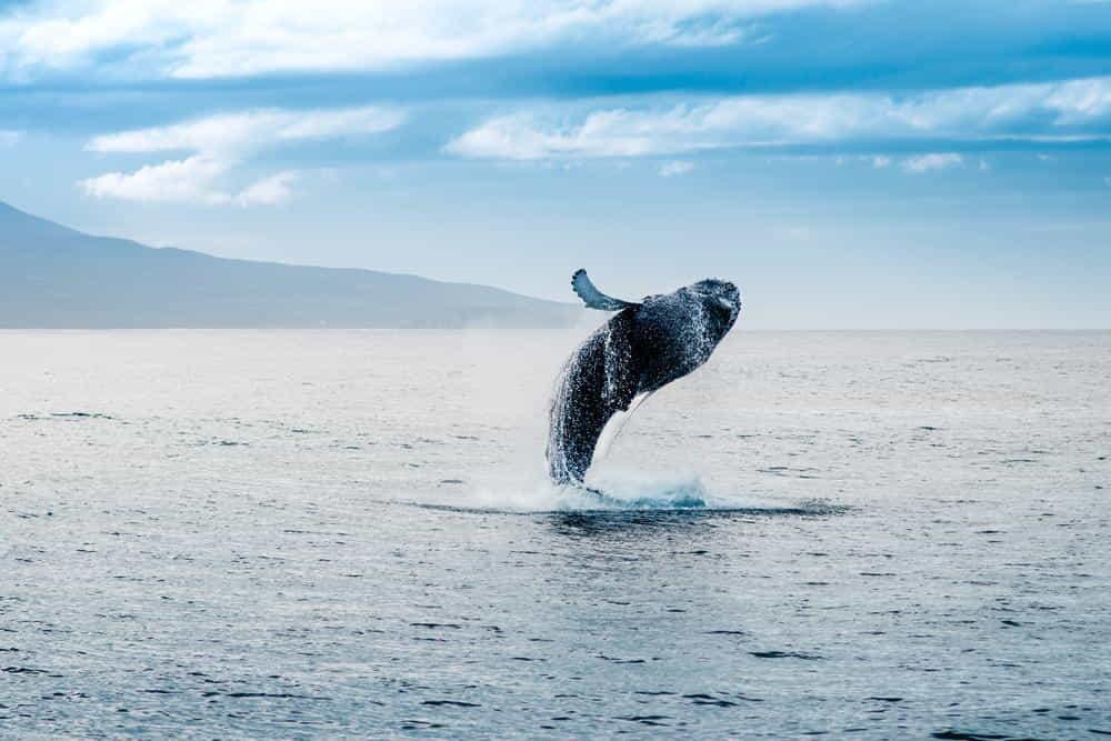 парке фоторедактор выпрыгивает кит в картинке нанесение этом